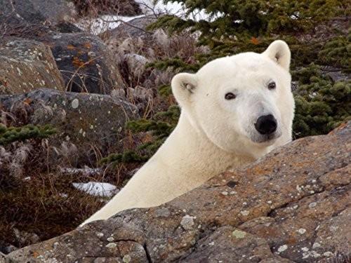 Dokument Tajemství Arktidy