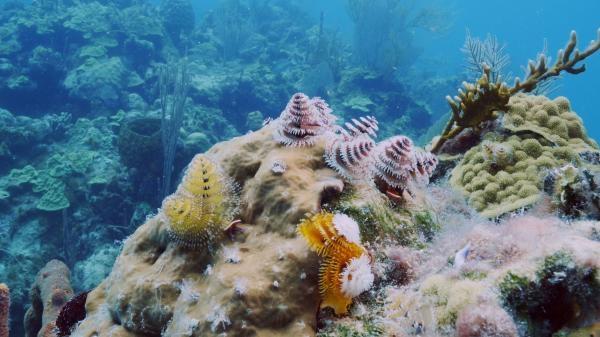 Mořské parky