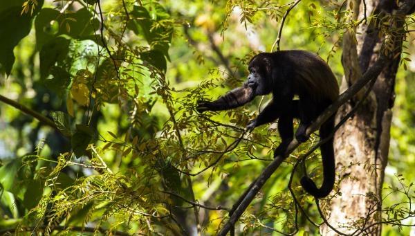 Ochrana divoké zvěře v Malawi